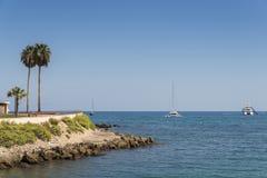 棕榈树和豪华游艇在彻特d ` Azur,法国 免版税库存照片