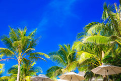 棕榈树和阳伞在一个热带海滩,天空在 免版税库存照片