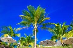 棕榈树和阳伞在一个热带海滩,天空在 免版税库存图片