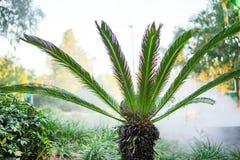 棕榈树和雾 免版税库存照片