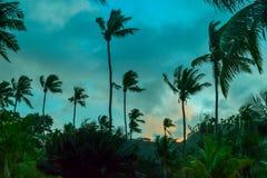 棕榈树和风景剪影视图在日落在塞舌尔群岛 免版税库存照片