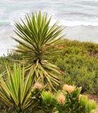 棕榈树和仙人掌花在海滨上 库存照片