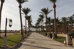 棕榈树和绿叶照片绿洲  沿海滩的堤防在Makadi,埃及 免版税图库摄影