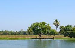 棕榈树和稻田在喀拉拉,印度临近死水 库存照片
