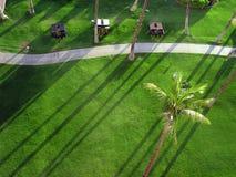 棕榈树和绿草草坪 免版税库存照片