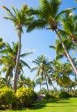 棕榈树和绿草,多米尼加共和国 图库摄影