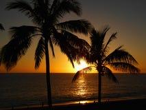 棕榈树在一个海滩的Puerto Naos中在拉帕尔玛岛 免版税库存图片