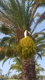 棕榈树在一个美丽的公园 免版税库存图片