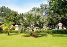 棕榈树在一个美丽的公园 免版税图库摄影