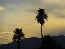 棕榈树在亚利桑那 免版税库存图片