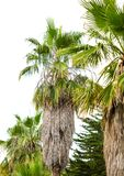 棕榈树在公园 亚热带气候 免版税库存照片