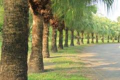 棕榈树在公园 免版税库存照片