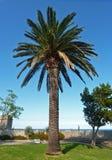 棕榈树在公园 库存照片