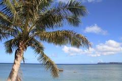 棕榈树在关岛 库存照片