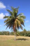 棕榈树在关岛 免版税库存照片