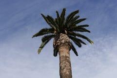 棕榈树在城堡Parc 免版税图库摄影