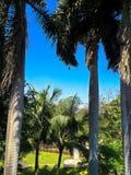 棕榈树在夏天 免版税库存图片