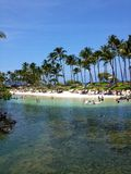 棕榈树在夏威夷 免版税库存图片