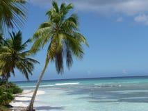 棕榈树在多米尼加共和国 免版税库存照片