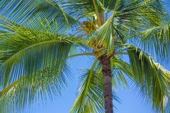 棕榈树在天堂 免版税库存照片