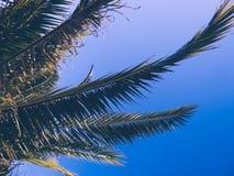 棕榈树在天空的背景中 免版税库存图片