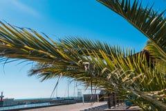 棕榈树在天空的背景中 免版税图库摄影