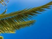 棕榈树在天空的背景中 免版税库存照片