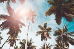 棕榈树在太阳和天空蔚蓝背景离开 周末假日热带海滩概念背景,假期假日概念 免版税库存照片