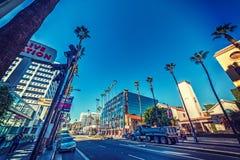 棕榈树在好莱坞 库存图片
