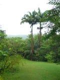 棕榈树在巴巴多斯 免版税库存图片