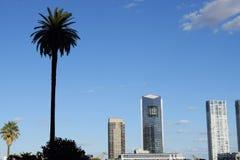 棕榈树在摩天大楼背景中  库存图片