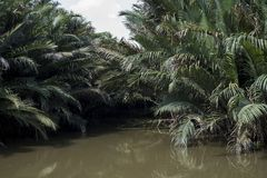 棕榈树在棕色水中在比Da海岛在胡志明市,越南 库存照片