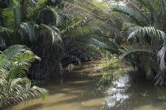 棕榈树在棕色水中在比Da海岛在胡志明市,越南 免版税库存照片
