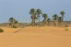 棕榈树在沙漠 免版税库存照片