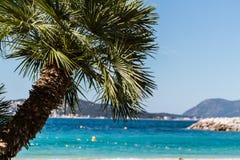 棕榈树在法国海滨 库存照片