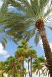 棕榈树在海滩的一个大风天 免版税库存照片