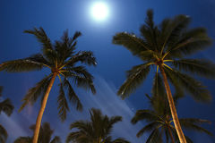 棕榈树在深夜 泰国 酸值苏梅岛海岛 免版税库存照片