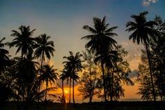 棕榈树在热带手段的日落剪影 免版税库存照片