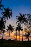 棕榈树在热带海滩胜地的日落剪影 免版税库存照片