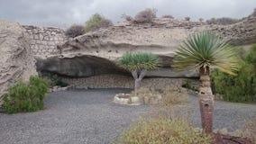 棕榈树在特内里费岛临近岩石 库存图片