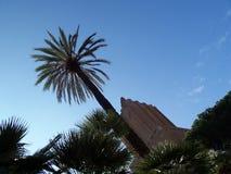 棕榈树在罗马,意大利 免版税图库摄影