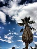 棕榈树在美国 库存照片