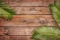 棕榈树在葡萄酒planked木背景离开 库存照片