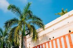 棕榈树在蓝天下在马杜赖,印度 库存照片