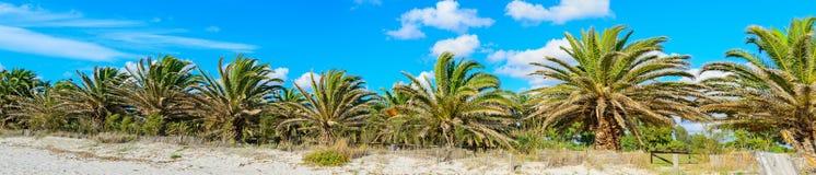 棕榈树在蓝天下 免版税图库摄影
