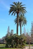 棕榈树在街市圣何塞 库存照片