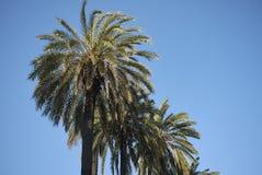 棕榈树在那不勒斯 库存照片