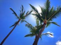 棕榈树在阳光下和明亮的蓝天 免版税库存照片