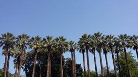 棕榈树在雅典 库存照片