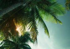 棕榈树在黑暗的天空的叶子剪影 库存照片